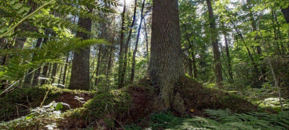 Путешествие в заповедный лес